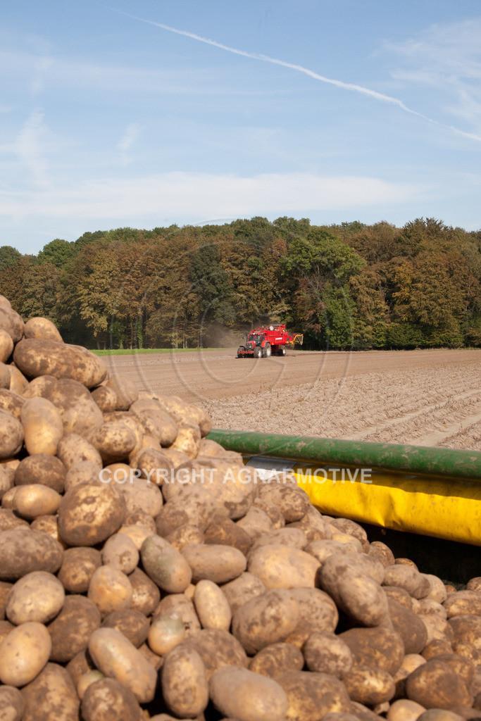 20110929-IMG_5947 | Ernte auf einem Kartoffelfeld - AGRARBILDER