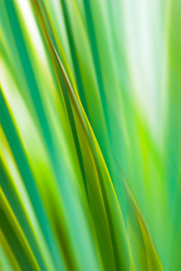 Abstraktes Pflanzenportrait, Laub des Neuseelandflachs | Best. Nr. irl_2007_05_3578.  Einen Anwendungsvorschlag finden Sie hier: https://shop.soulimages.eu/img/c3mx6q. Weitere Einrichtungsbeispiele sind in der Galerie