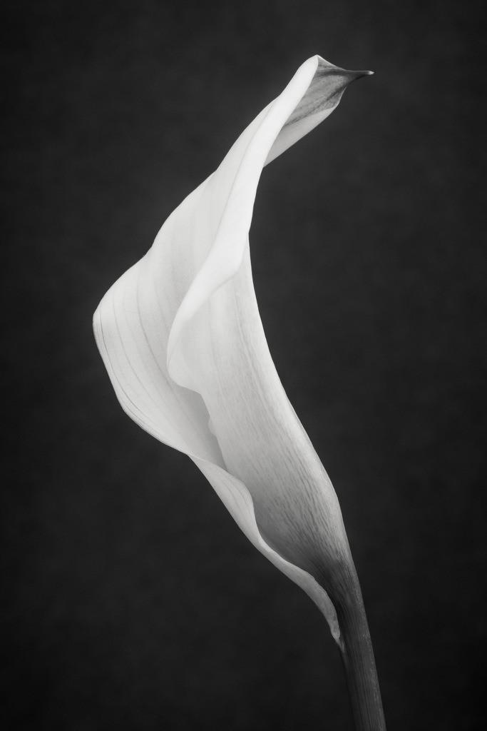 Florale Prinzessin | Weiße Blüte im Profil.