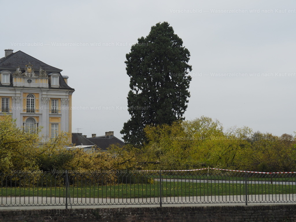 Last tree falling (10/10)