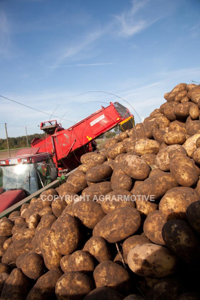 20110929-IMG_5994 | Ernte auf einem Kartoffelfeld - AGRARBILDER