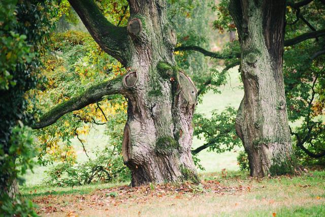 Uralter Baum im Schlosspark in Sychrov | Spaziergang im Schlosspark beim Schloss Sychrov