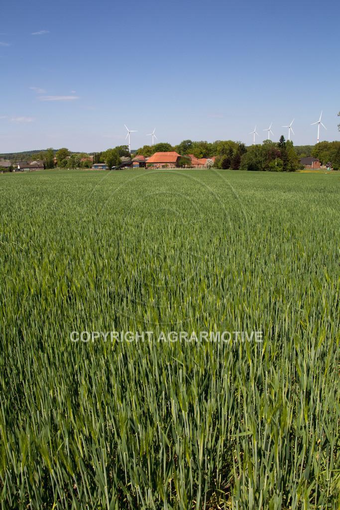 20130515-IMG_6655 | Gerste Bestand im Frühling - AGRARBILDER Bildagentur