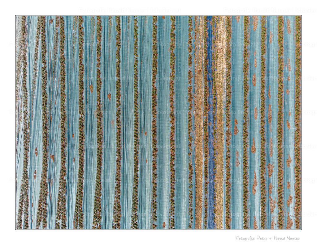 Erdbeerfeld von oben | Drohnenaufnahme