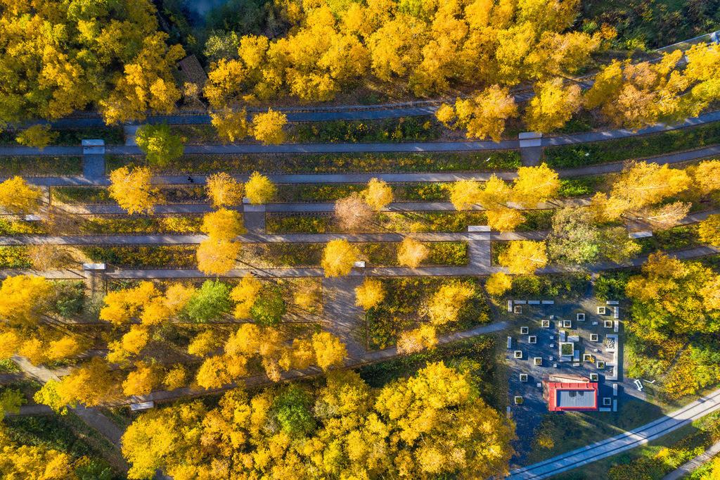 JT-181108-082   Zeche Zollverein in Essen, UNESCO Welterbe, Gleisboulevard im Zollverein Park im Herbst,