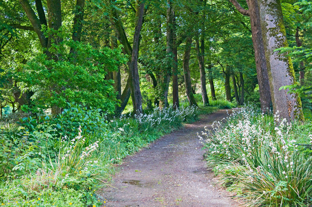 Lebensweg 04 | Waldweg Lisselan Gardens, Clonakilty, Irland