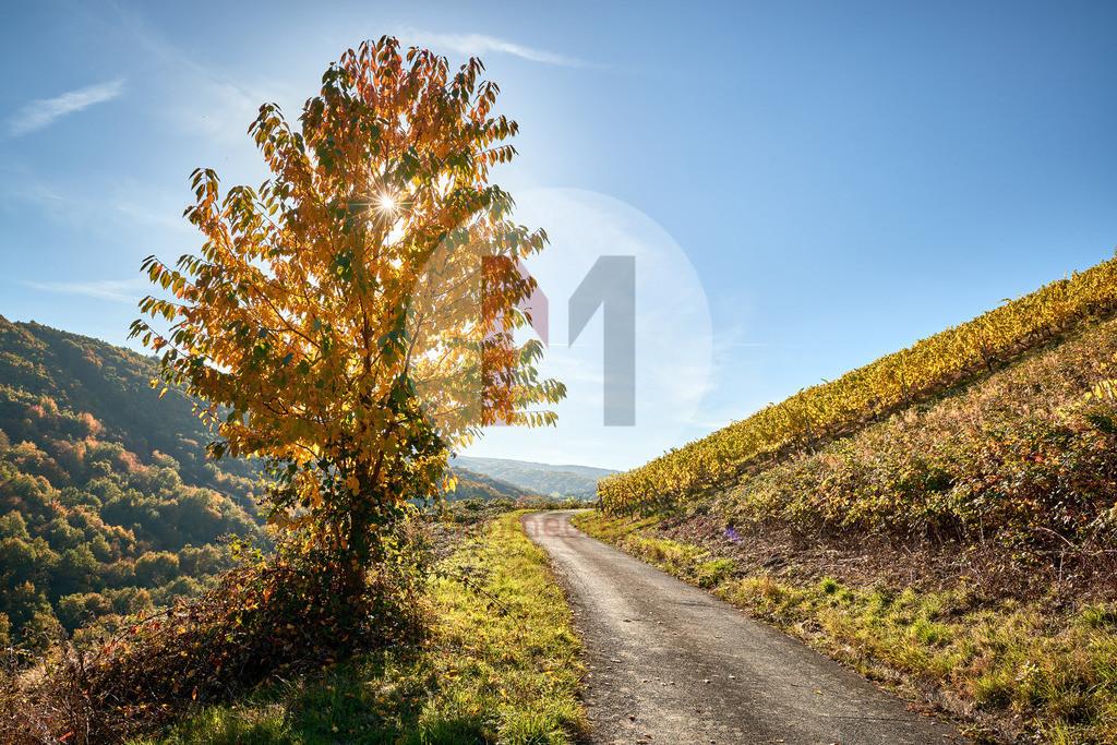 Der Rhein-Burgen-Wanderweg im Herbst
