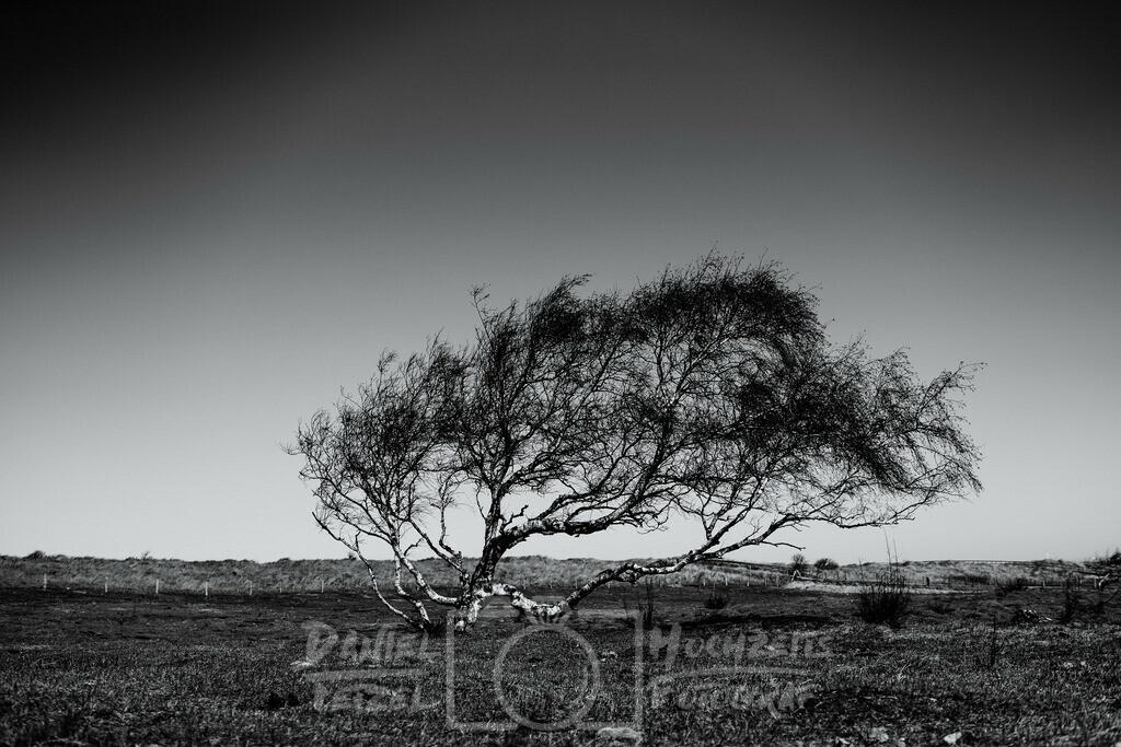 Einzelner Baum | Baum am Meer