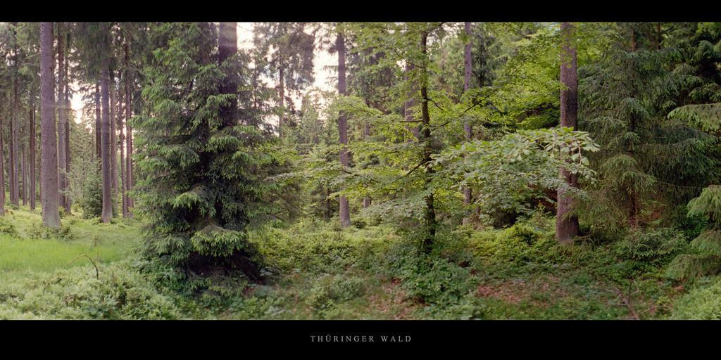 Thüringer Wald | Fichtenwald mit Buche im Thüringer Wald