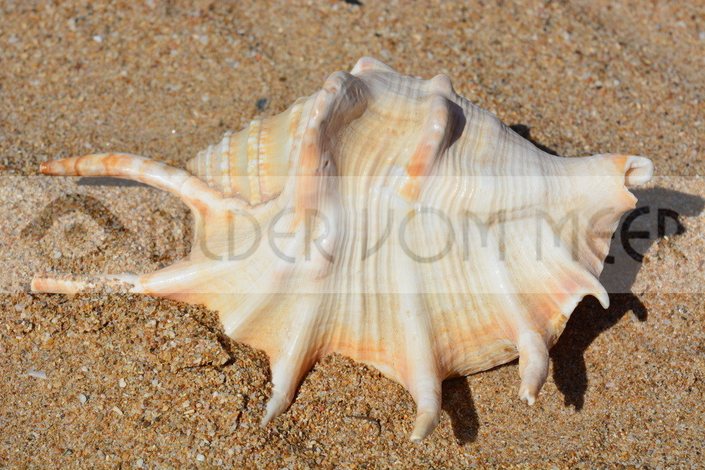 Muschel Bilder aus Spanien | Muschelbilder vom Meer