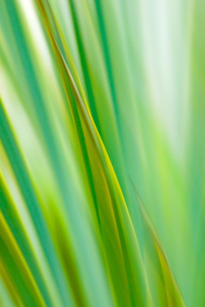 Holz 09   Neuseeland-Flachs