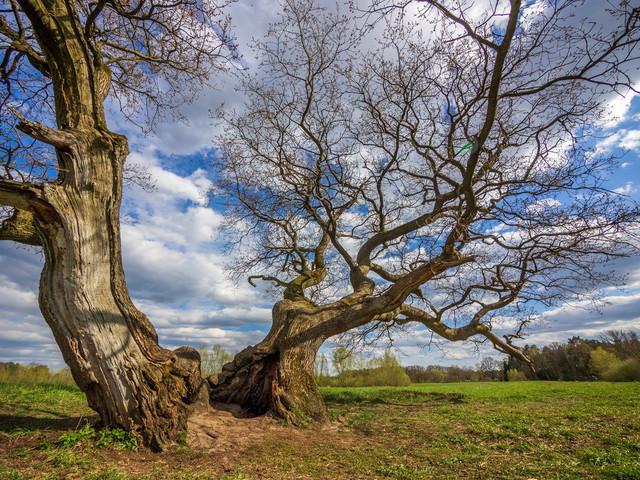 P4260020   exlusive Natur- Landschafts- und Makrofotografie aus Celle