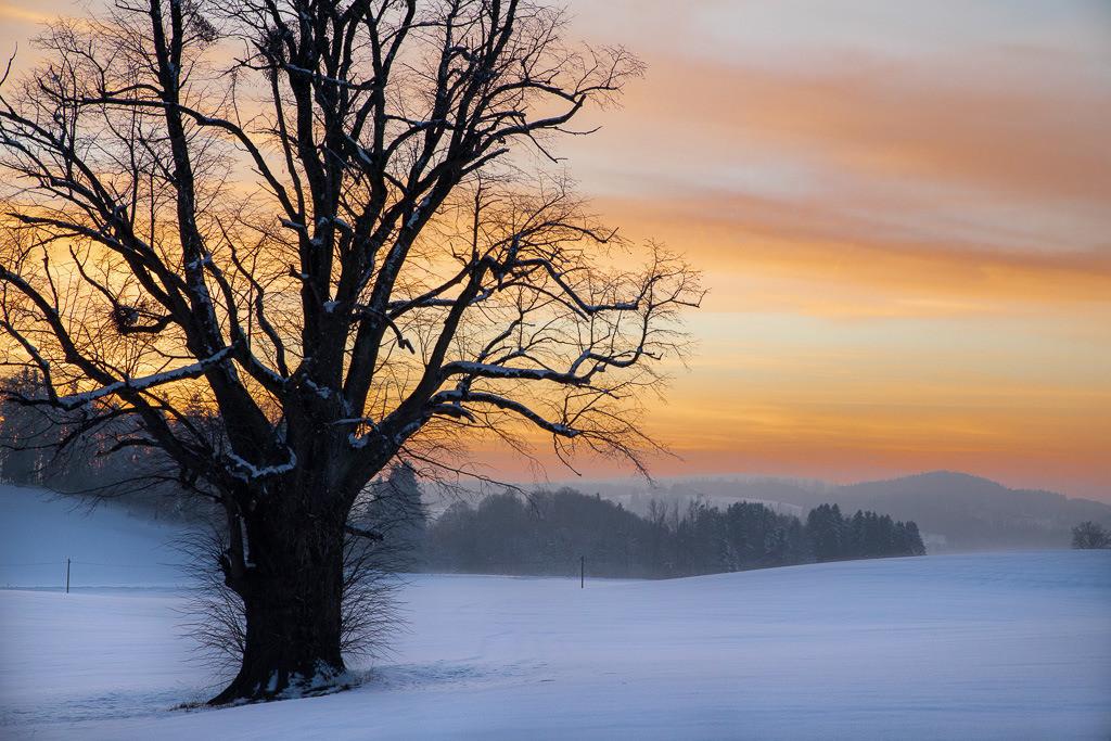 Abenrot im Winter | Zu allen Jahreszeiten zieht mich dieser Baum an dieser besonderen Stelle  magisch an.
