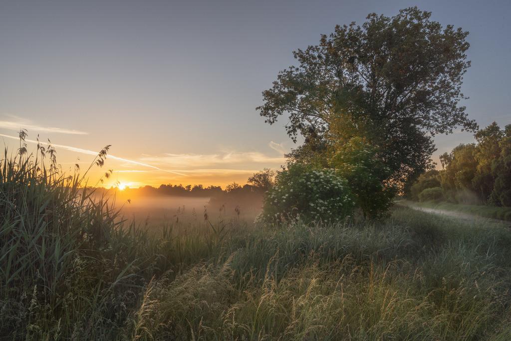 Sunrise Allerpark Nebel auf dem Feld