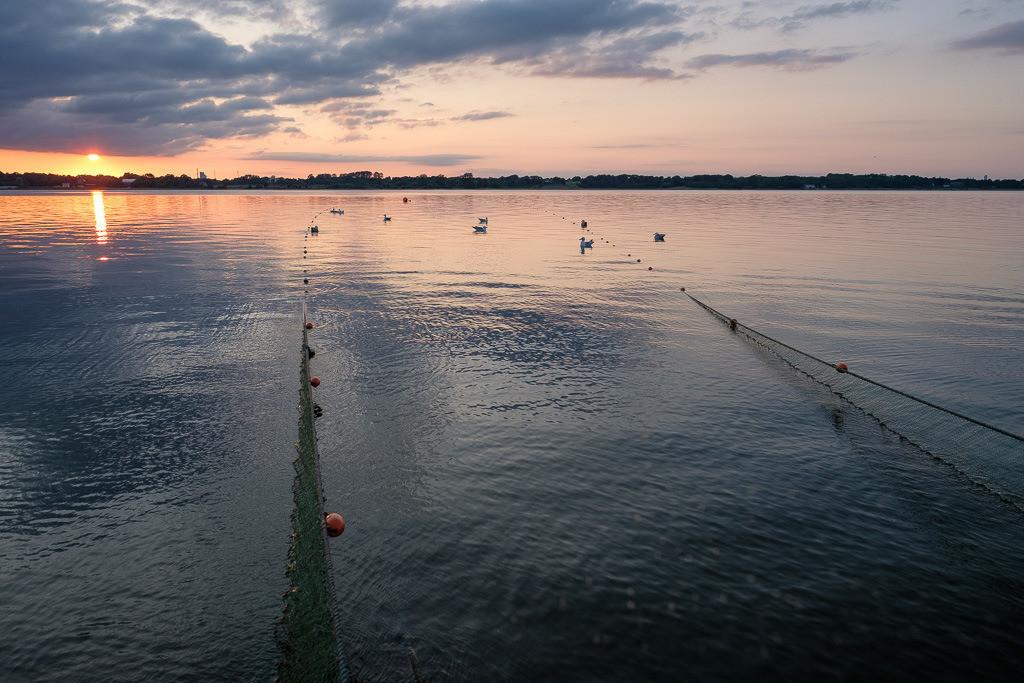 Wadenfischen auf der Schlei © Holger Rüdel | Ein ausgelegtes Wadennetz wie hier auf der Kleinen Breite der Schlei ist eine komplexe Konstruktion mit einer Länge von 150 Metern oder mehr pro Flügel plus Tauwerk.