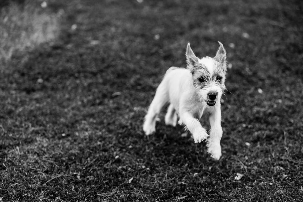 dogs--elmar.pics_5900