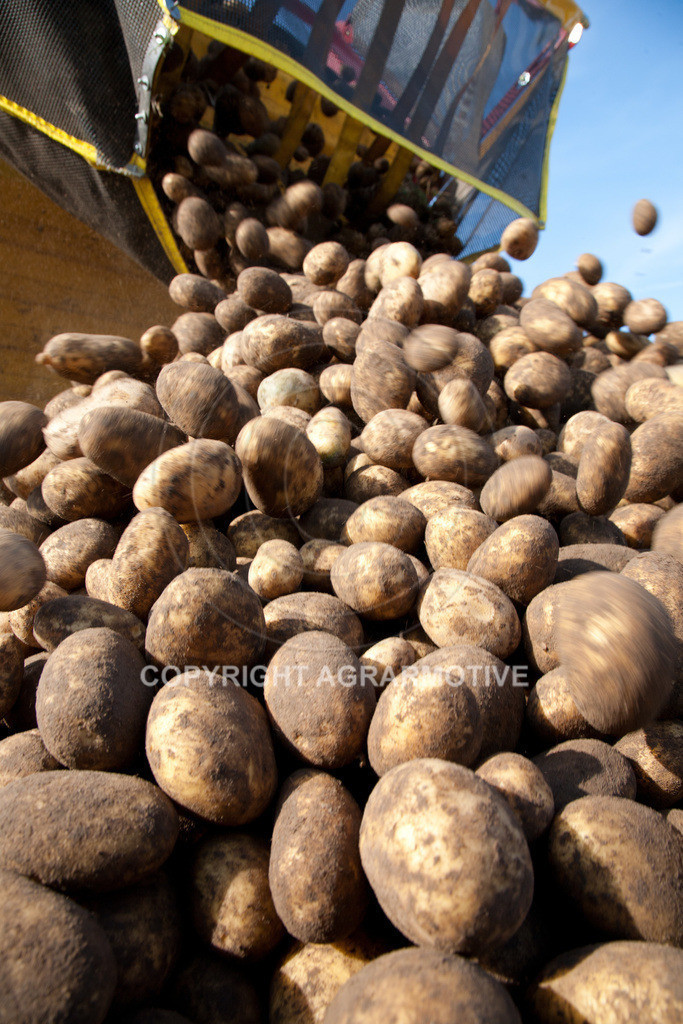 20110929-IMG_5985   Ernte auf einem Kartoffelfeld - AGRARBILDER
