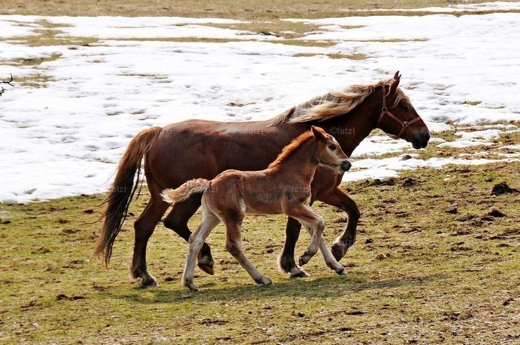 pferde-200310_134k