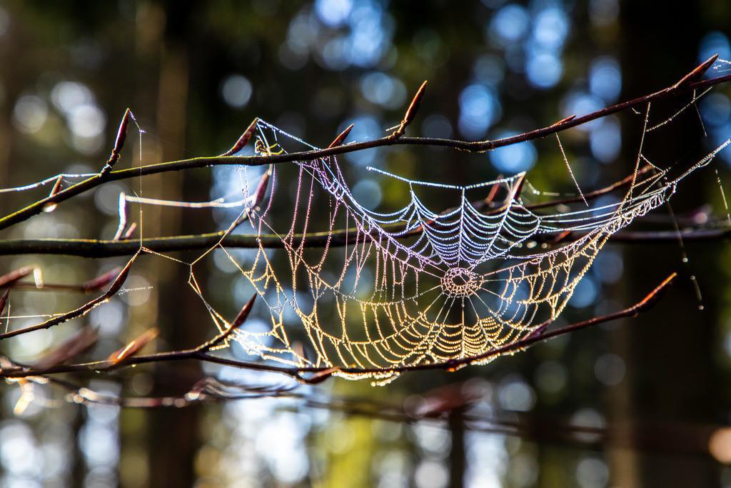 JT-181107-056 |  Herbst, Nebel, Landschaft, Wald, in der Nähe von Jagdhaus, Wassertropfen, Tau, auf kleinen Spinnennetzen, Schmallenberg, Sauerland, NRW, Deutschland, Europa.