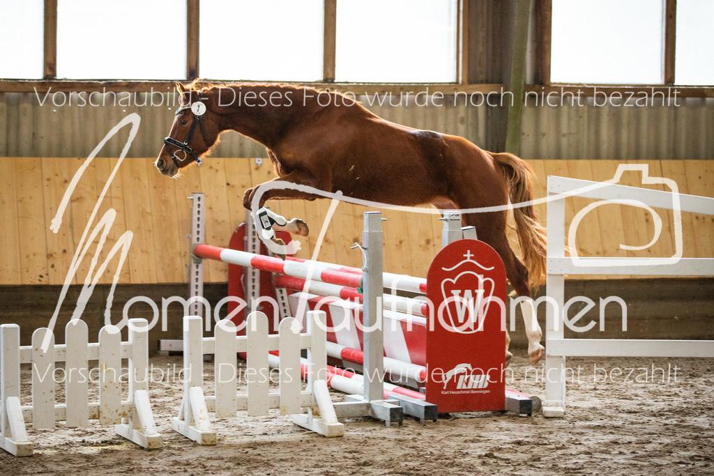 Freispringen-Pony-3j-03