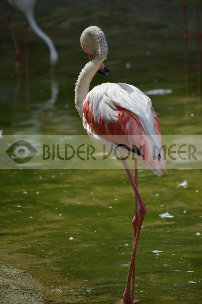 Flamingo Bilder | Flamingo Bilder aus Italien