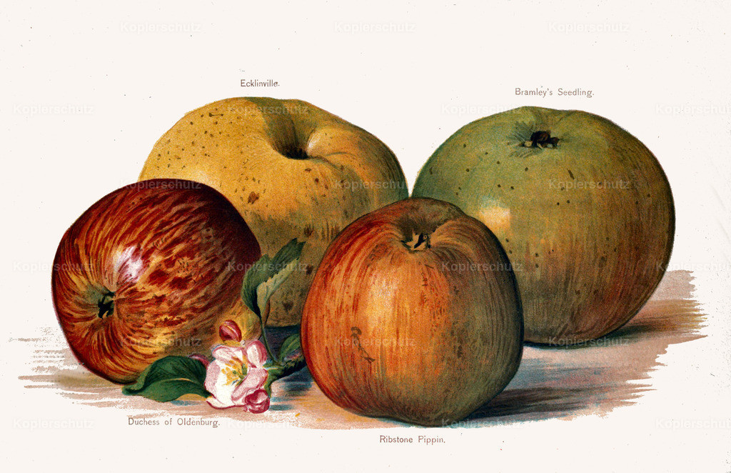 Fruit-Growers-Guide-1890-May-Rivers-Obst-Früchte (33)