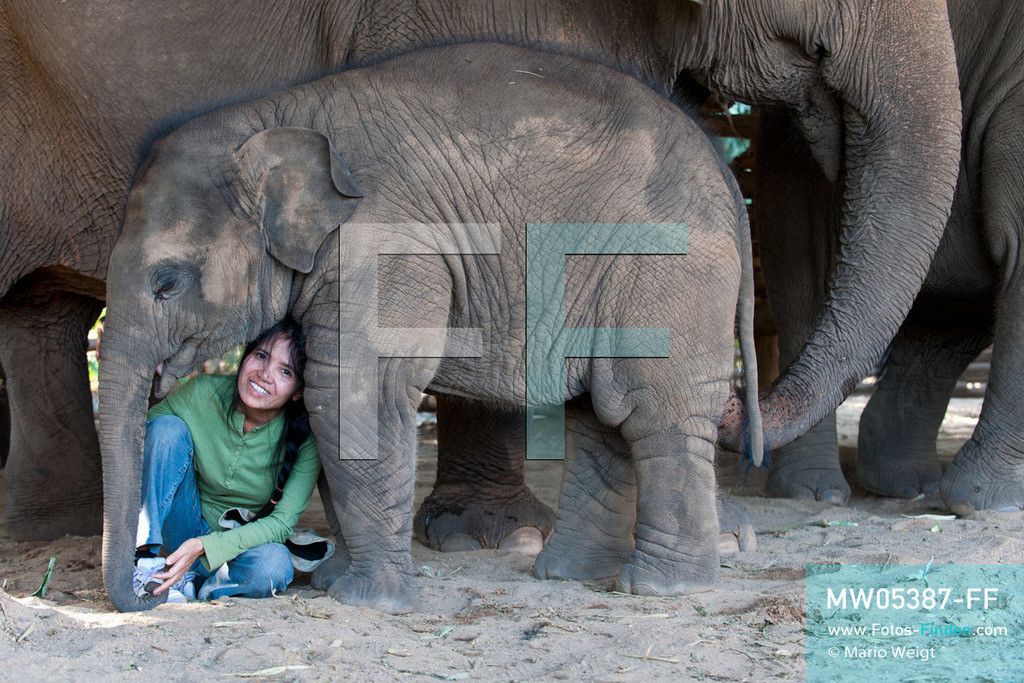 MW05387-FF | Thailand | Chiang Mai | Reportage: Elephant Nature Park | Lek mit dem neun Monate alten Elefantenbaby Pha Mai.  Die thailändische Tierschützerin Sangduen Lek Chailert hat ein großes Herz für Elefanten. Im Jahr 1995 gründete sie den Elephant Nature Park am Mae-Taeng-Fluss, nördlich von Chiang Mai. In diesem natürlichen Refugium leben über 30 Dickhäuter. Elefantenführer, Tierärzte und freiwillige Helfer kümmern sich um die meist ehemaligen Arbeitselefanten.   ** Feindaten bitte anfragen bei Mario Weigt Photography, info@asia-stories.com **