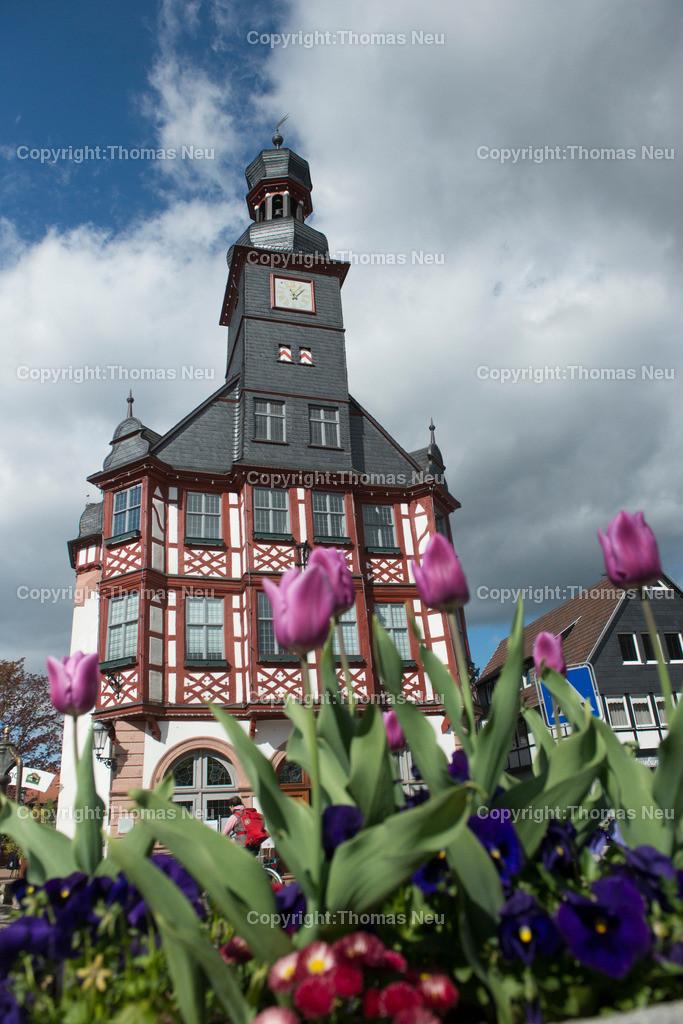Lorsch_Rathaus-3 | Lorsch, historisches Rathaus, Tulpen, Fruehling, Bergstrasse, Hessen, Bild: Thomas Neu
