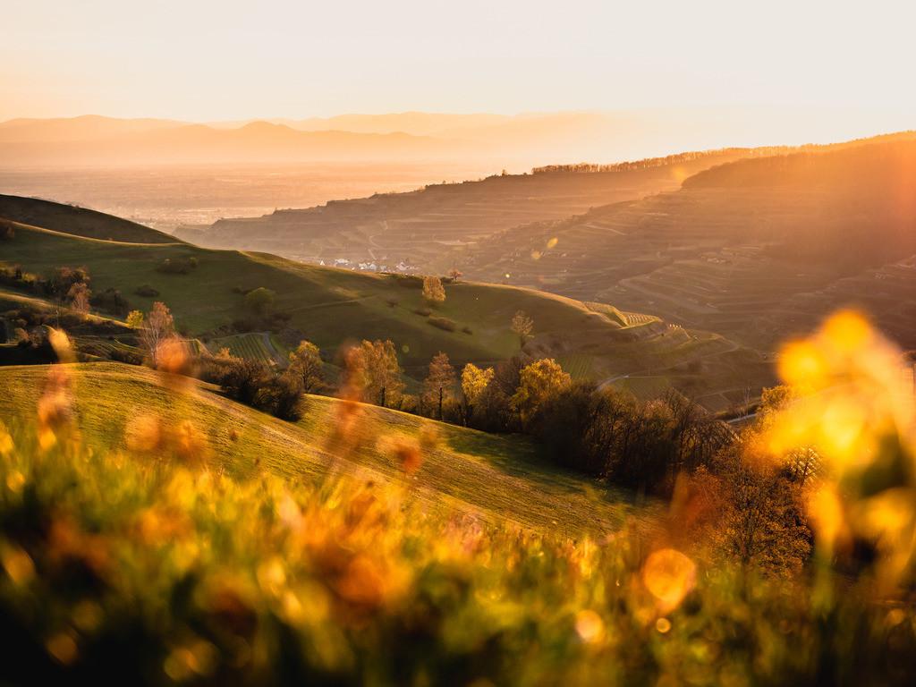 Frühling am Kaiserstuhl | Sonnenuntergang auf der Schelinger Höhe am Kaiserstuhl