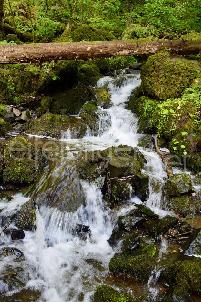 Wasserfall in der Wolfsschlucht | fotografiert bei Bettenfeld / Manderscheid in der Eifel (Vulkaneifel)