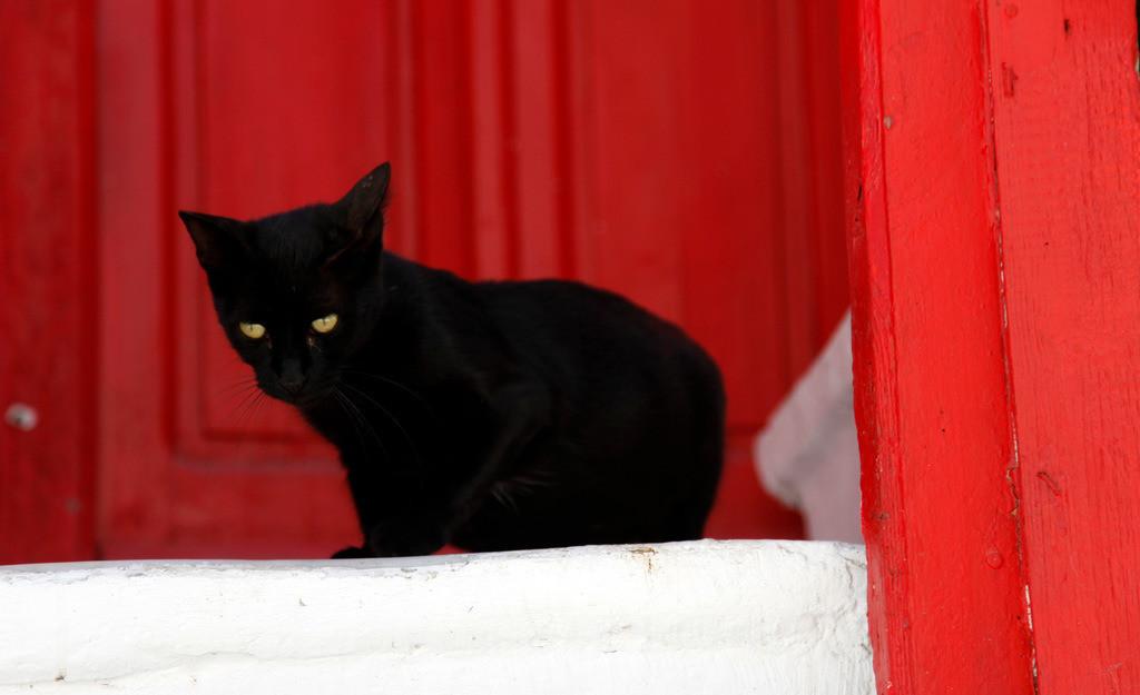 JT-110809-138 | Schwarze Katze, mit gruenen Augen, vor einer roten Tuere. In der Altstadt von Mykonos, Griechenland, Europa..