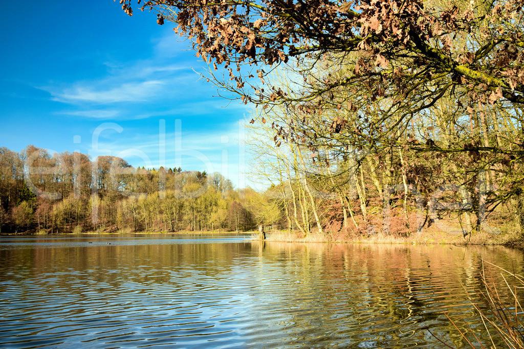 Herbstleuchten am Holzmaar in der Vulkaneifel | herbstliche Stimmung am Holzmaar