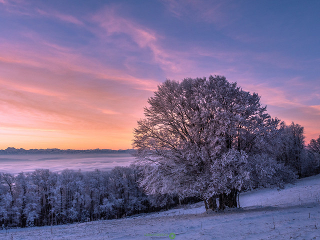 Frostiger Morgen | Baum mit märchenhaft überzogenem Frost