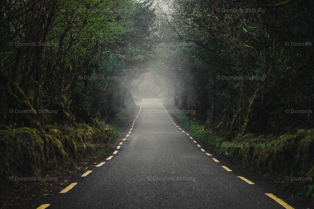 Tramore | Weg durch den Tunnel aus Bäumen
