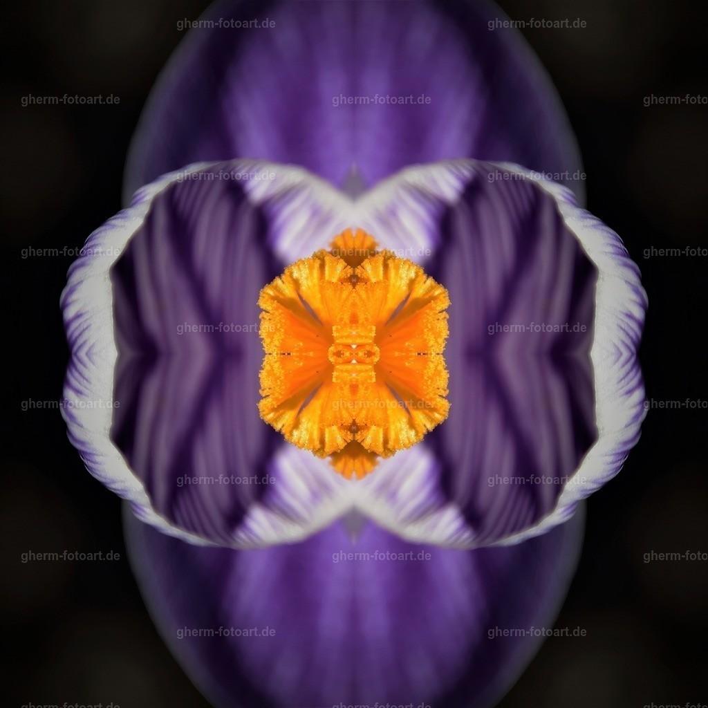 GPH_3117-dunkel (2)-sharpen-focus-kaleidoskop