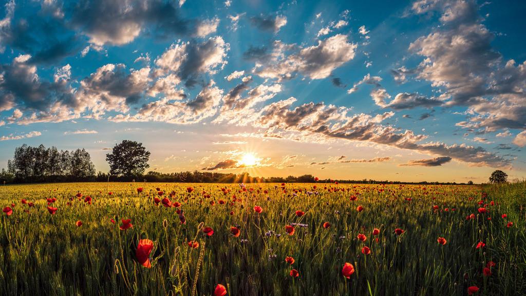 Sommertraum | Sommerliches Getreidefeld im Ried im schönsten Abendlicht