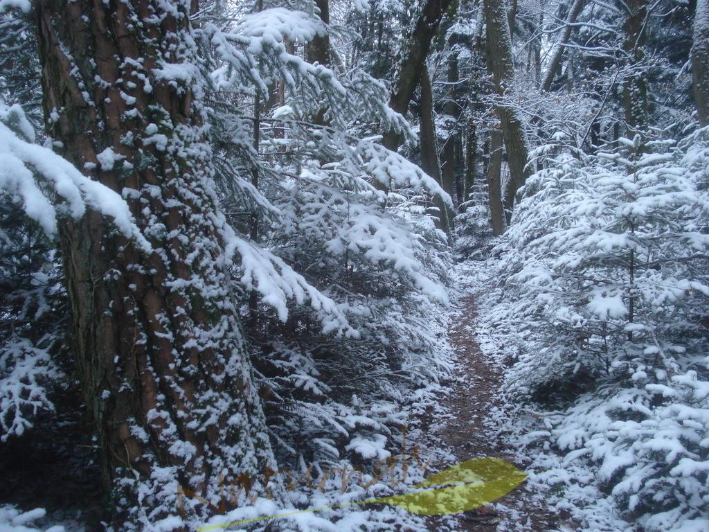 Der Weg in den winterlichen Wald | Folge dem Pfad in den winterlichen Wald und Du findest Dich selbst - in der Stille des schneebeladenen Waldes!