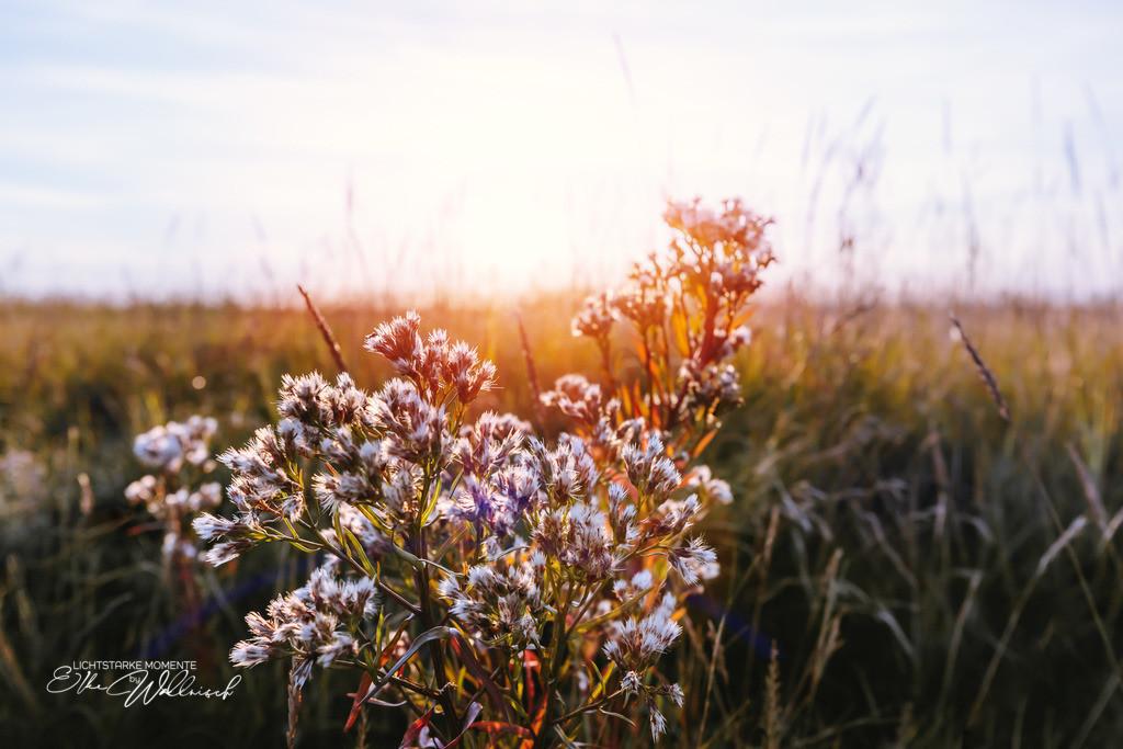 Abendglühen | in den Salzwiesen, SPO Böhl