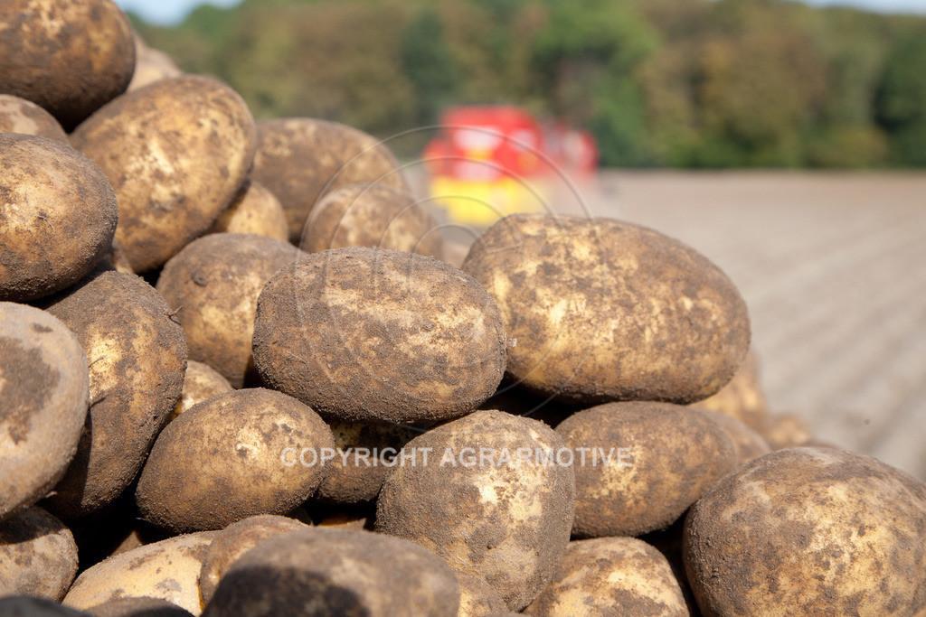 20110929-IMG_6009 | Ernte auf einem Kartoffelfeld - AGRARBILDER
