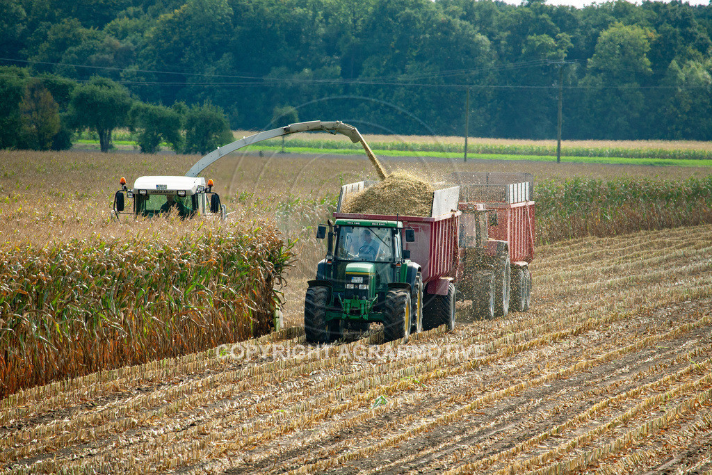 20080914-IMG_9042 | Silomais wird gehäckselt - AGRARFOTO Bilder aus der Landwirtschaft