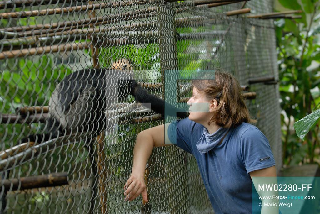 MW02280-FF | Vietnam | Provinz Ninh Binh | Reportage: Endangered Primate Rescue Center | Käfig mit Cat-Ba-Langur, auch Goldkopflangur genannt. Der Deutsche Tilo Nadler leitet das Rettungszentrum für gefährdete Primaten im Cuc-Phuong-Nationalpark.   ** Feindaten bitte anfragen bei Mario Weigt Photography, info@asia-stories.com **