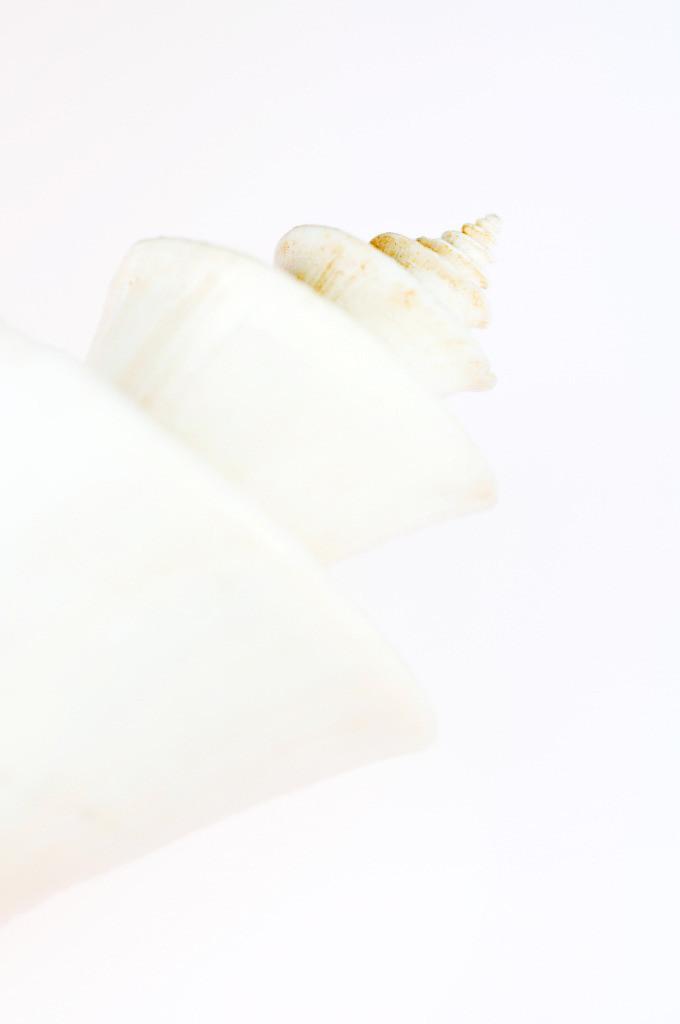 Best. Nr. metall09 | Spiralförmiges weißes Gehäuse einer  Japanischen Wunderschnecke (Thatcheria mirabilis) | Zum Element Metall gehört der Westen, seine Jahreszeit ist der Herbst, seine Farben sind weiß, silber und gold, gerne auch glänzend. Es kommen runde und spiralige Formen in Frage. Metall repräsentiert Klarheit, Ordnung und Distanz und steht mit Erfolg und Reichtum in Verbindung. Daher eignet es sich besonders auch für Geschäftsräumlichkeiten, Büros oder Anwaltskanzleien.