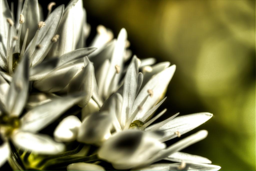 Wohlriechend | Freundliche Gedanken sind Blüten des Herzens. Ingeborg Maria Sick