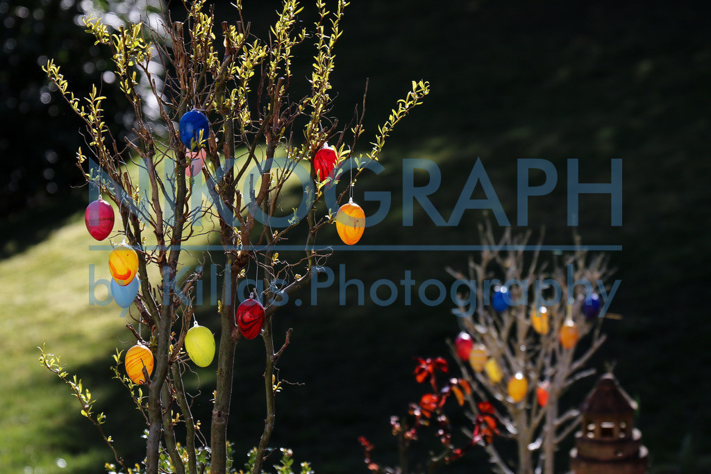 Ostern | Ostereier am Baum