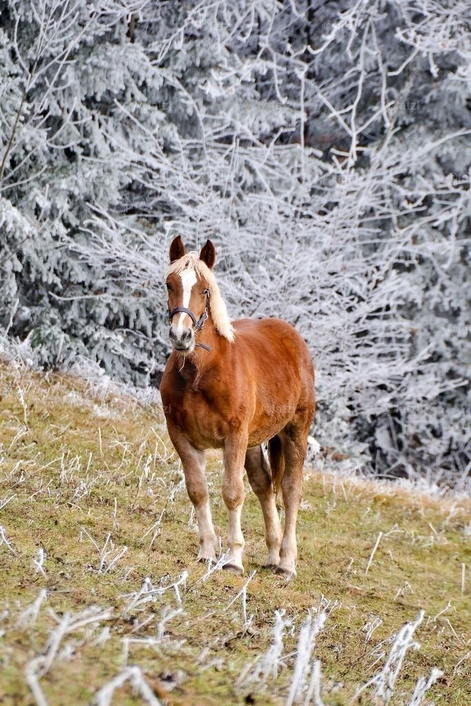 pferde-rauhreif_nov11_002_1