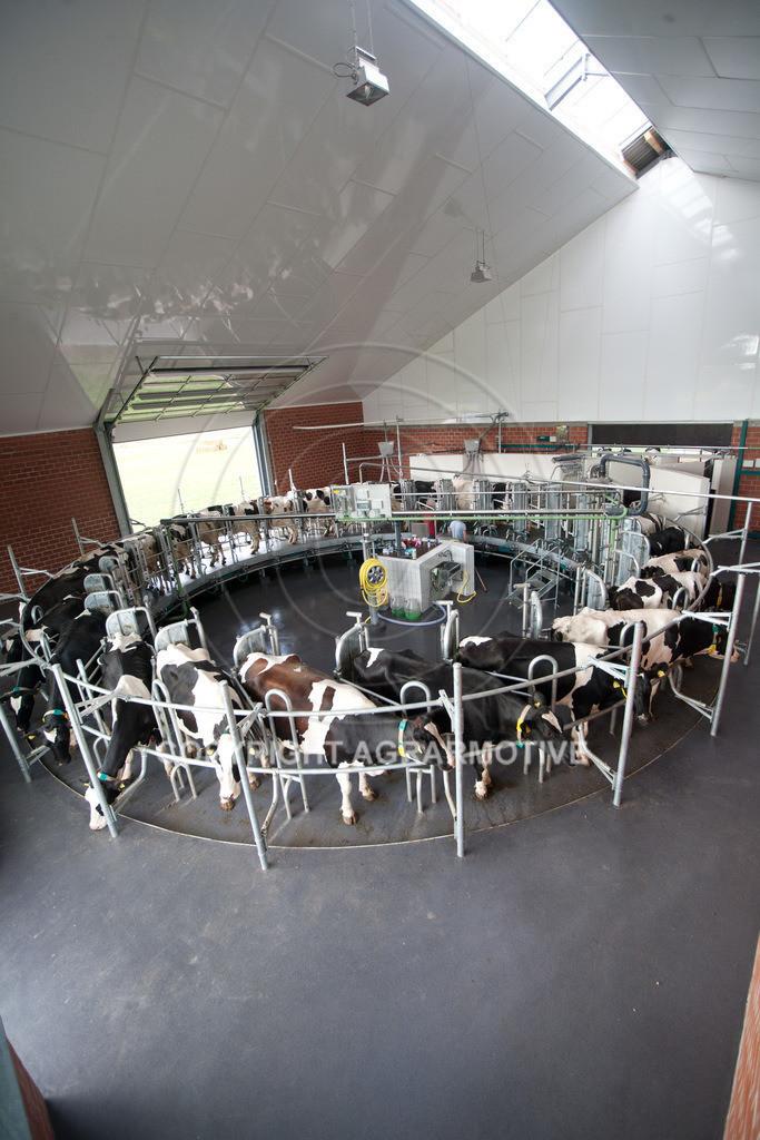 20100821-IMG_0266 | Kühe werden im Melkkarussell gemolken
