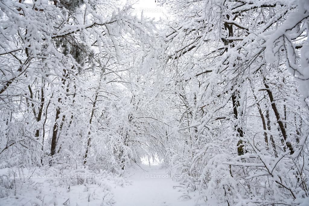 10049-11432 - Winter im Huy | max. Auflösung 8256 x 5504