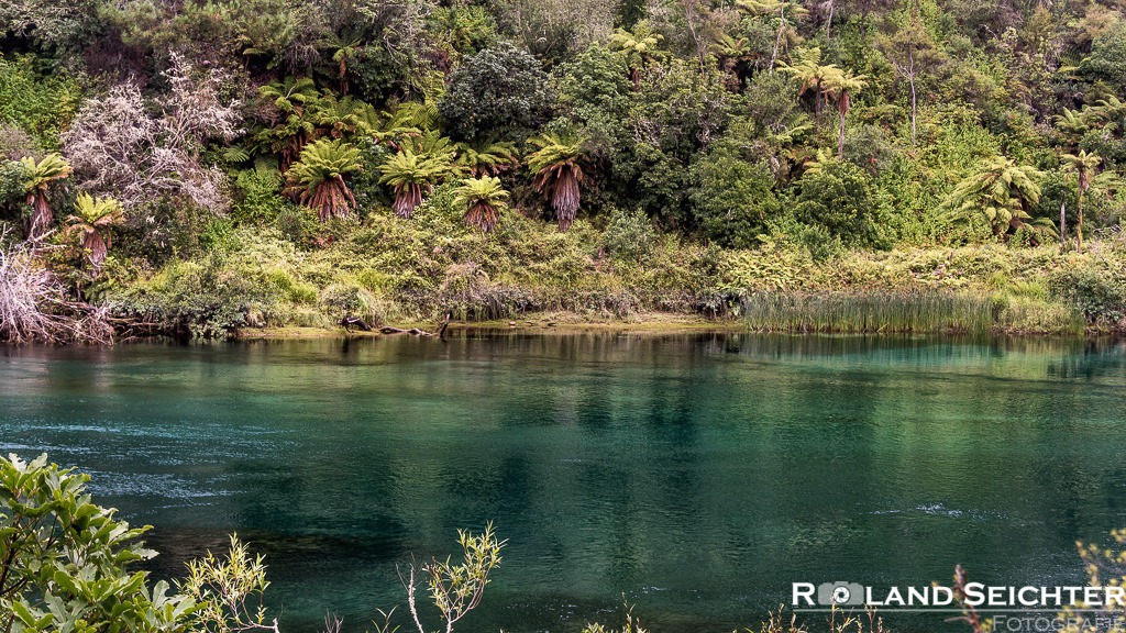 Waikato Green