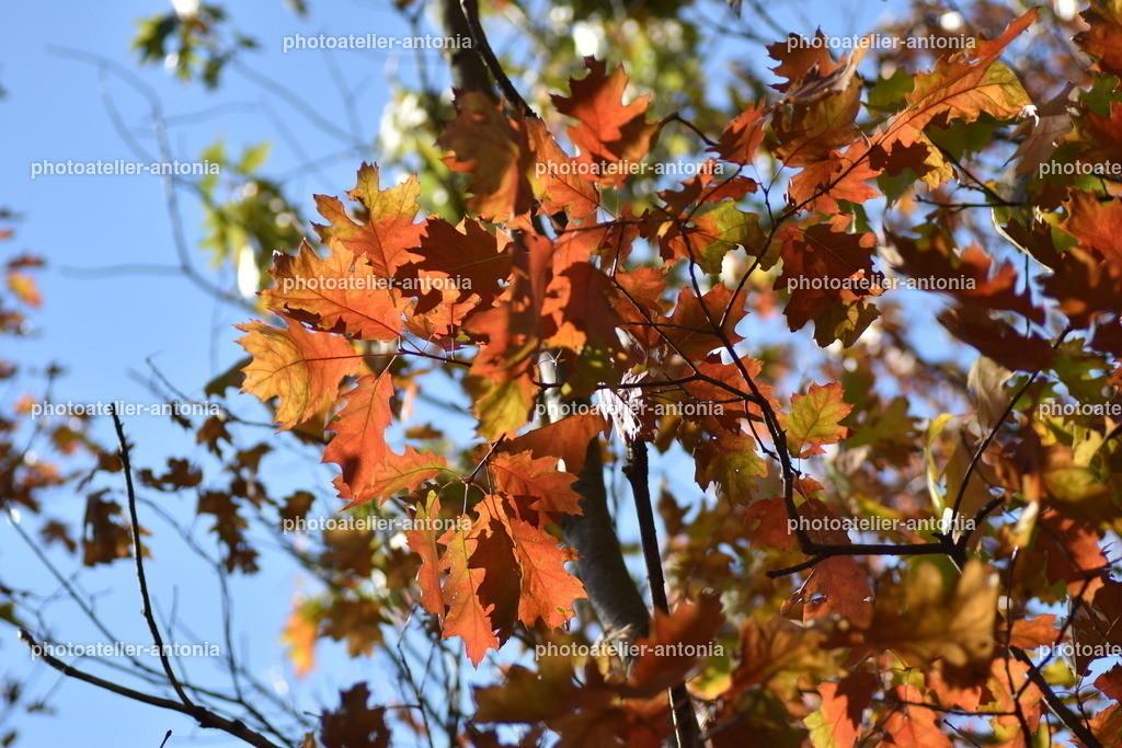 Herbstblätter I