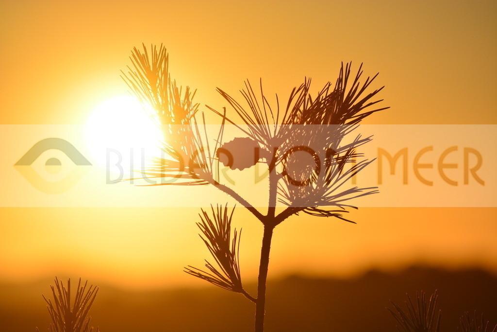 Bilder Sonne | Bilder Sonne Spanien